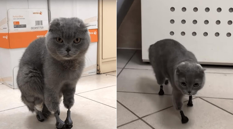 hogyan kezeljük a macskák pikkelysömörét