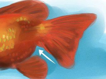 otthoni kezelés pikkelysömör népi módszerek vörös folt a csuklón