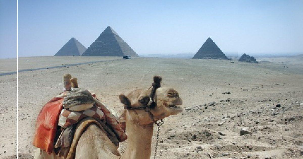 egyiptom safaga pikkelysömör kezelése golden whisker pikkelysömör kezelése