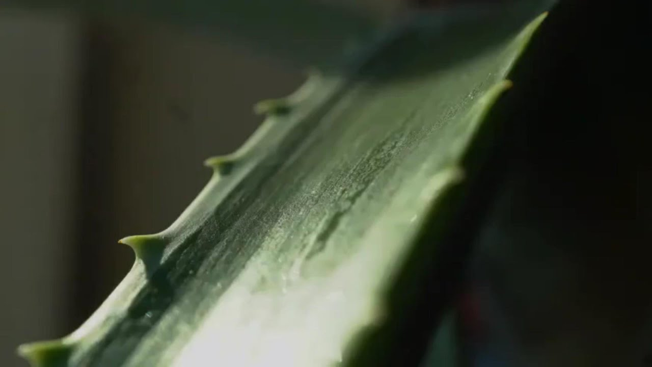 aloe készítmény pikkelysömörhöz