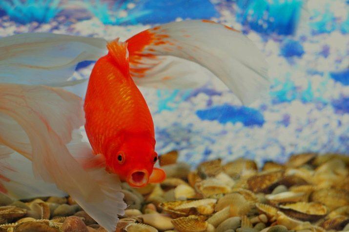 aranyhal betegség vörös foltok kezelése kenőcs pikkelysömör clotrimazole